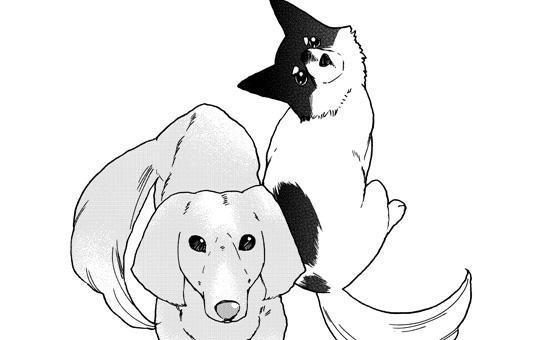 ペットの声が聞こえたら  第9話「花火とうちわのこと」①